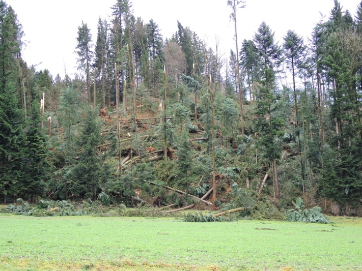 ... grossen Waldschaden an. (Bilder: Fritz Ischer / zvg)