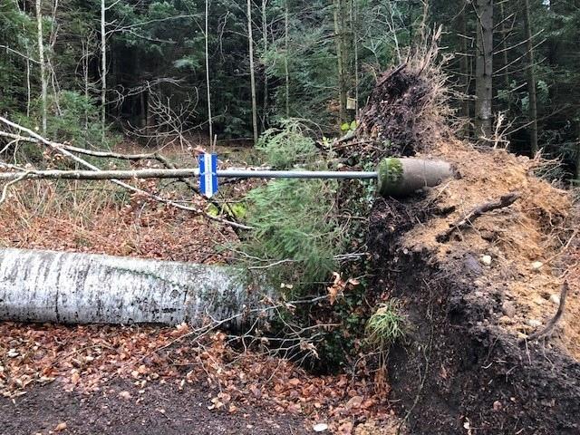 .... und Bäume wurden teilweise mit grösseren Stücken des Waldbodens rausgerissen. (Bilder: Markus Joss)
