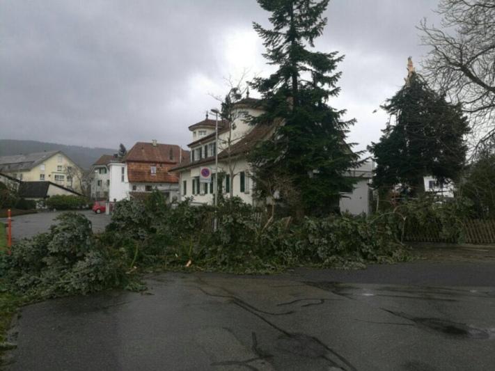 Umgestürzte Bäume auch in Konolfingen...