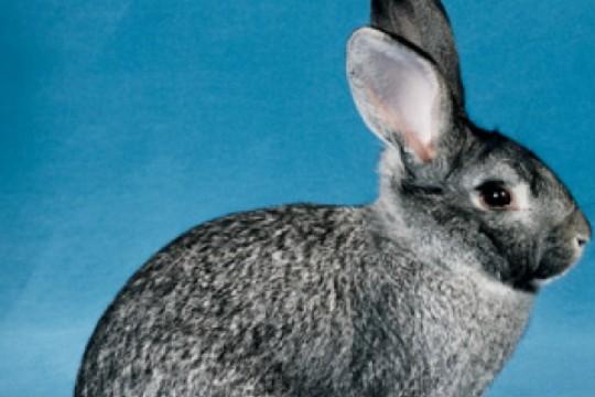Kleintierausstellung Thun Viele Spitzenplatze Fur Regionale