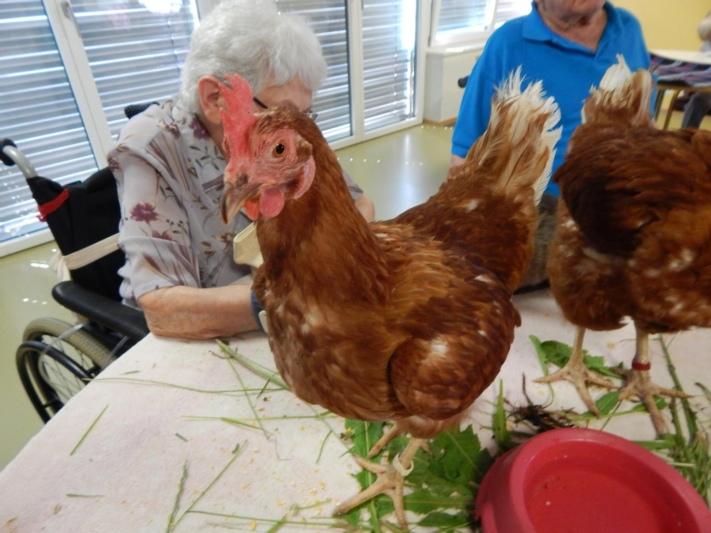 Irma und Rosa sorgten am Unterhaltungsnachmittag des Alterszentrums für Abwechslung. (Bild: Ruth Mast)
