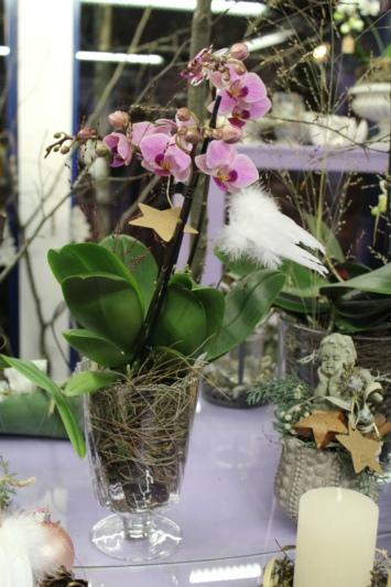 orchideen sind ein tolles weihnachtsgeschenk. Black Bedroom Furniture Sets. Home Design Ideas
