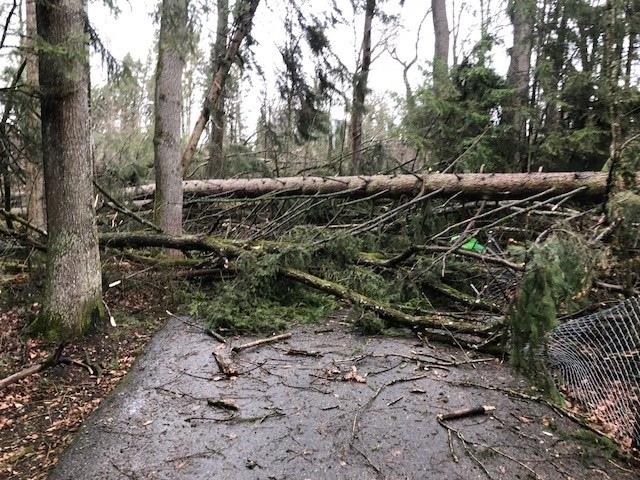 ... an etwa 20 Orten in Münsingen lagen Bäume auf den Strassen...