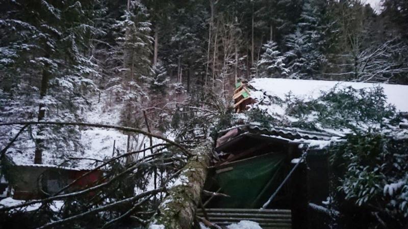 Gerätemagazin und Dachvorsprung des Vereinshauses wurden zerstört: Am Donnerstag stürzte ein dritter Baum auf die Bauten des Ornithologischen Vereins Zäziwil und Umgebung im Waldmätteli. (Bild: zvg)