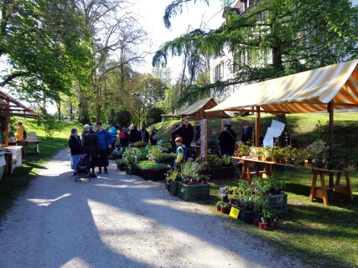 Wildblumen, Kräuter und Setzlinge: Am Münsinger Pflanzenmärit findet sich ein breites Angebot. (Bild: zvg)