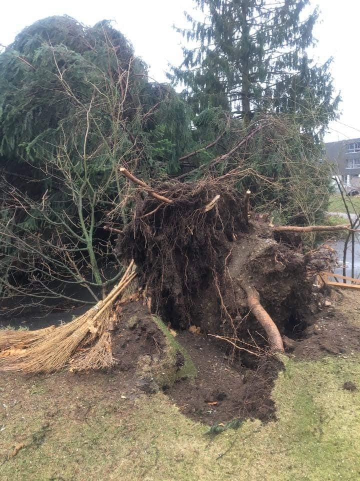 Auch die Feuerwehr Wichtrach musste aufgrund umgestürzter Bäume, ...
